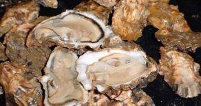 Les Huîtres Vendée-Atlantique