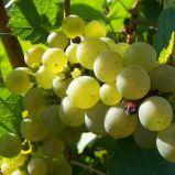 Tourisme en Vendée et vin de Vendée : un duo gagnant !