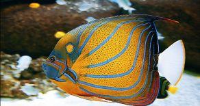 Aquariums de Vendée
