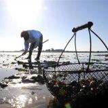 La pêche à pied en Vendée