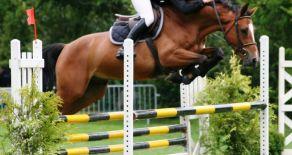 L'équitation en Vendée