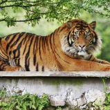 Les zoos en Vendée