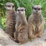 Le zoo des Sables d'Olonne